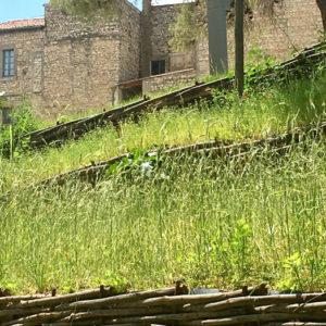 végétaux du jardin archéologique