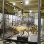 Muséum d'histoire naturelle et archéologique